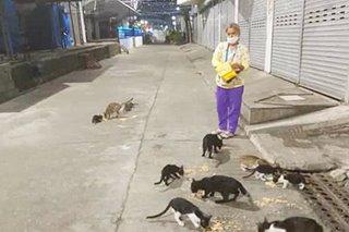 Babaeng nagpapakain ng mga pusa sa Ilocos Norte sa gitna ng lockdown, hinangaan