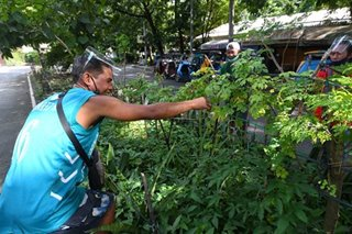 Gov't gets on 'plantito, plantita' trend with urban agricultural program