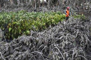 Tulong hindi pautang: Farmers' group may apela sa gobyerno sa gitna ng Taal eruption
