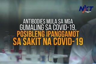 Antibodies mula sa mga gumaling sa COVID-19, posibleng ipanggamot sa sakit na COVID-19