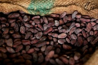 Mindanao's Auro ships cacao beans to Europe, a first for Philippines
