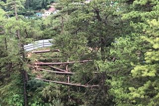 UP Baguio instructor na nagpresenta ng research vs tree cutting may death threat