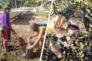 BFAR tukoy na ang sanhi ng fish kill sa Batangas