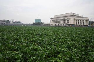 Pasig ferry balik-operasyon matapos 'pigilan' ng water hyacinth