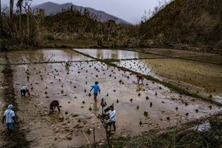 Twin typhoons leave billions in agri damage: DA