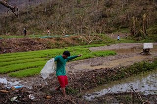PH to import more rice in 2021 after losing 8 days worth of supply due to typhoons