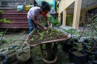 Planting for food security