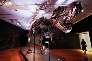 T-Rex fossil sells for record-breaking $31.8 million