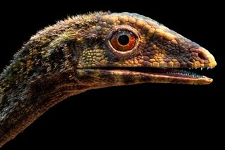 Scientists clarify origins of pterosaurs, the dinosaur era's flying reptiles
