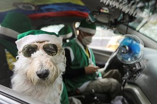 Colombian taxi driver and canine co-pilot spread Christmas cheer
