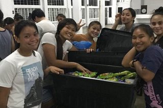 UAAP: Stranded at Adamson, Lady Falcons help out in fight against COVID-19