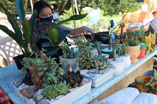 Are you a budding plantita? Here's a guide to a green weekend