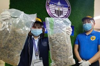 P1.5-M halaga ng marijuana nakuha sa misdeclared parcel sa Pasay