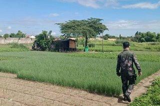 Babae higit 50 beses pinagsasaksak ng live-in partner sa Pampanga