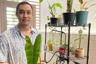 'Plantito, Plantita': Filipinos turn to plants to cope with coronavirus pandemic