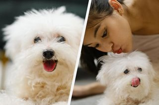 'Run free in paradise': Gabbi Garcia's pet dog she had since she was a kid dies