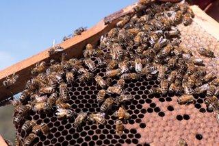 All about the money honey: Australia, NZ clash over manuka label