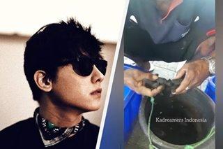 KathNiel fans in Indonesia adopt 119 turtles under Daniel Padilla's name
