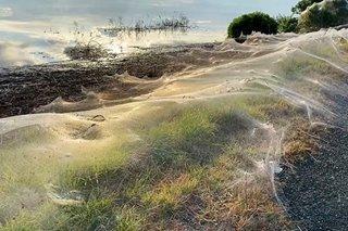 Spiders leave Australian region covered in webs