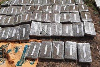 Higit P37 milyon halaga ng umano'y marijuana nasabat sa Kalinga