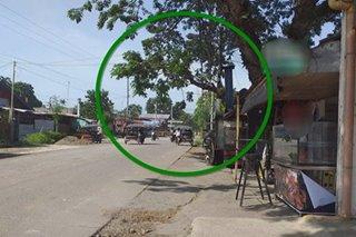 100-taong acacia tree nanganganib putulin dahil sa road widening sa Davao City