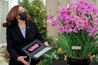 An orchid named Kamala Harris