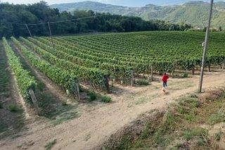 Farm business ng ilang Pilipino sa Italya, tuloy kahit may pandemya