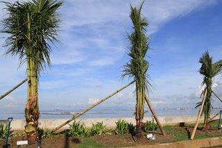 DENR completes Baywalk's beach look, plants palm trees on Roxas Boulevard