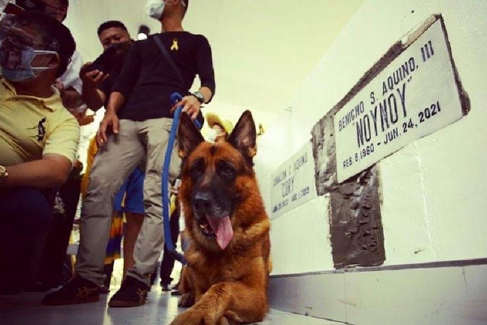 Apollo bids farewell to his human buddy Noynoy 1