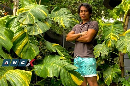 How this ex-OFW became king of the big, booming plant-selling business