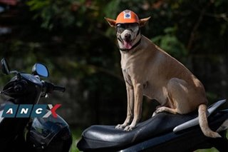 This star aspin has been his human's bike buddy, contest partner, life protector for 11 years