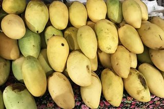 Guimaras mangoes from the postponed National Food Fair go viral and sell out in hours