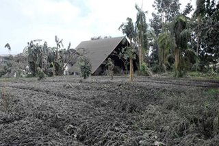 How the farmers of Taal are dusting off the ashes and making the first steps to recovery