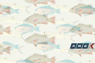From maya-maya to hasa-hasa: Our local fish names and the Pinoy love for reduplication