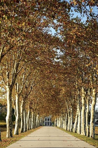 A weekend in Bordeaux 9