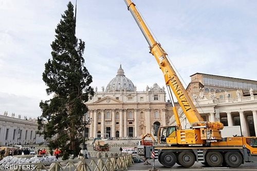 LOOK: Vatican hoists traditional Christmas tree