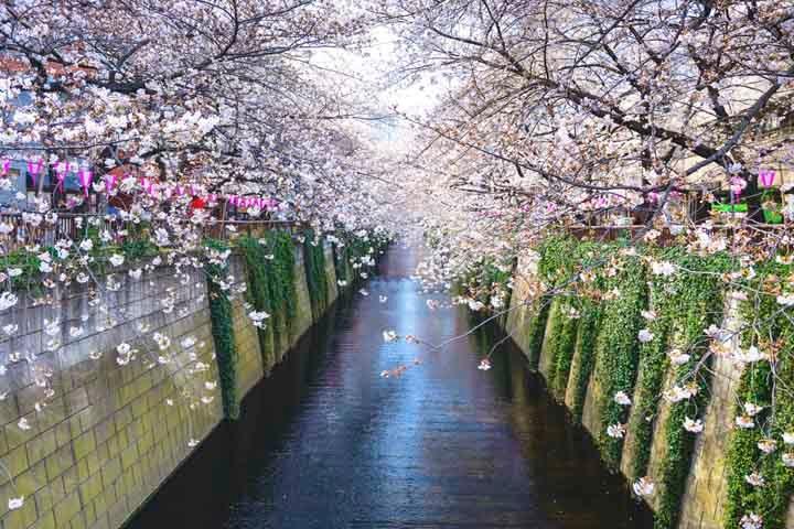 Spring-Japan6.jpg