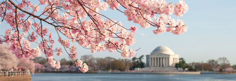 Travel, Spring, Washington DC